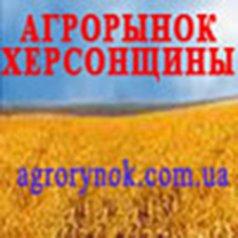 agrorynok